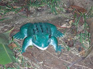 צפרדע בגינה